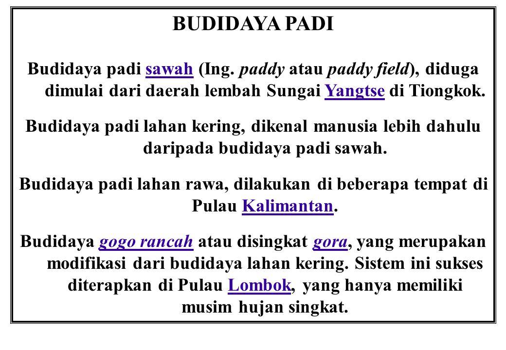 BUDIDAYA PADI Budidaya padi sawah (Ing. paddy atau paddy field), diduga dimulai dari daerah lembah Sungai Yangtse di Tiongkok.sawahYangtse Budidaya pa