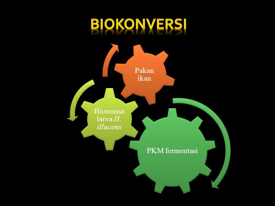 PKM fermentasi Biomassa larva H. illucens Pakan ikan
