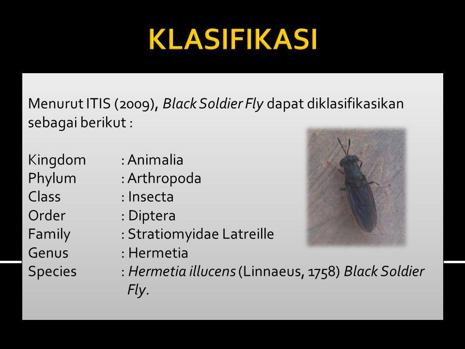 Menurut ITIS (2009), Black Soldier Fly dapat diklasifikasikan sebagai berikut : Kingdom: Animalia Phylum: Arthropoda Class: Insecta Order: Diptera Family: Stratiomyidae Latreille Genus: Hermetia Species: Hermetia illucens (Linnaeus, 1758) Black Soldier Fly.