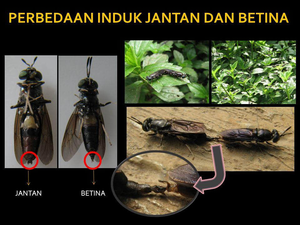 Sulit Mendapatkan Bahan Baku PKM di Pulau Jawa.