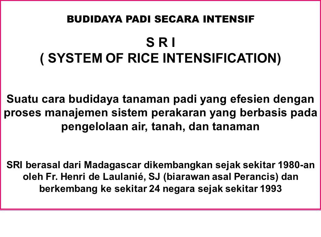 BUDIDAYA PADI SECARA INTENSIF S R I ( SYSTEM OF RICE INTENSIFICATION) Suatu cara budidaya tanaman padi yang efesien dengan proses manajemen sistem per