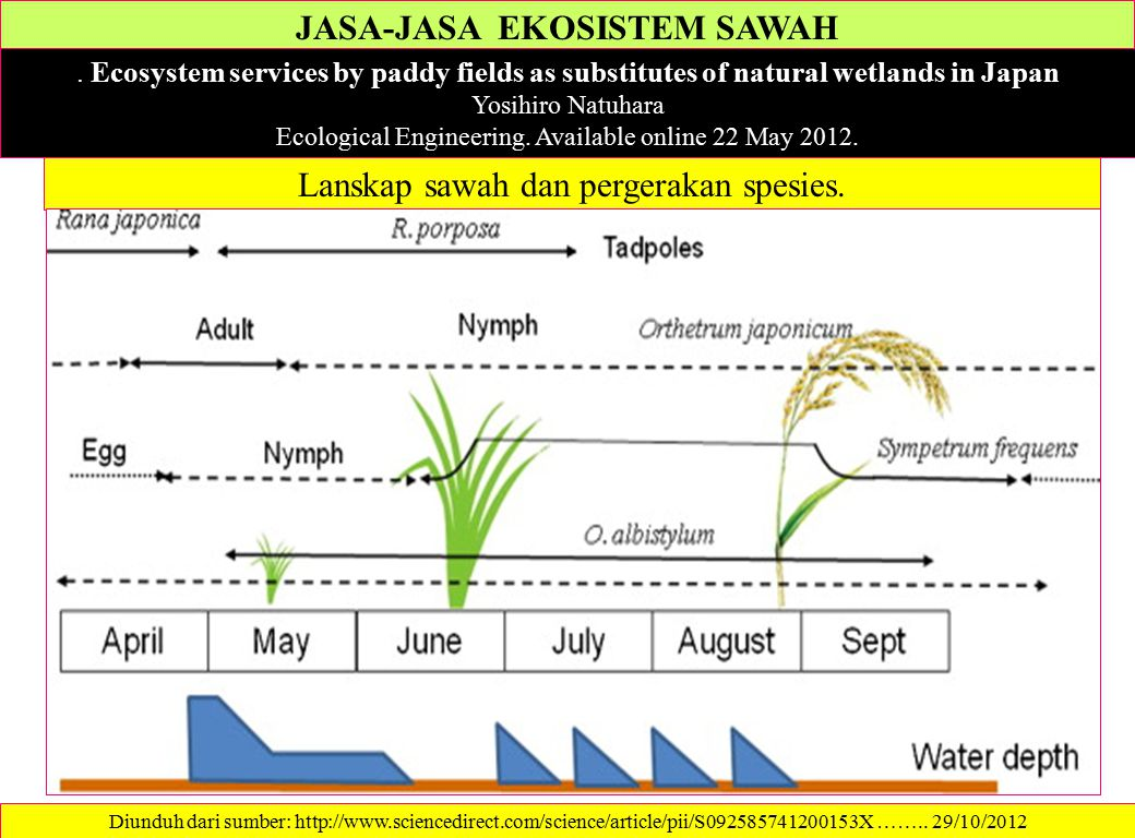 JASA-JASA EKOSISTEM SAWAH. Ecosystem services by paddy fields as substitutes of natural wetlands in Japan Yosihiro Natuhara Ecological Engineering. Av