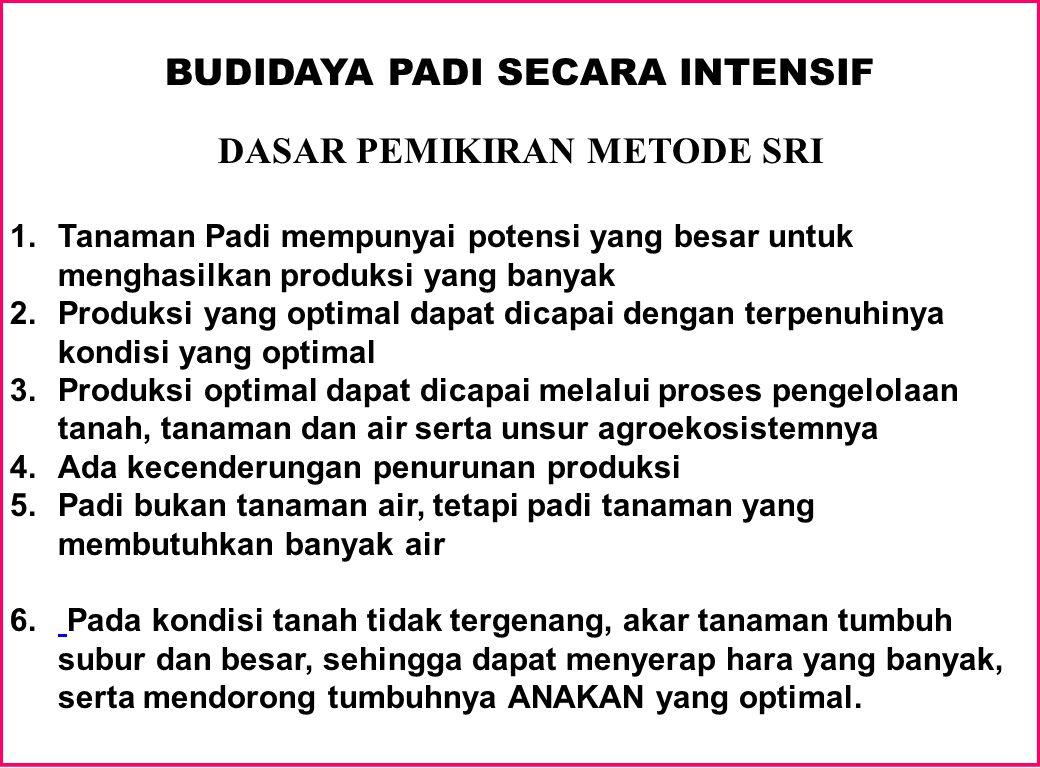 BUDIDAYA PADI SECARA INTENSIF DASAR PEMIKIRAN METODE SRI 1.Tanaman Padi mempunyai potensi yang besar untuk menghasilkan produksi yang banyak 2.Produks