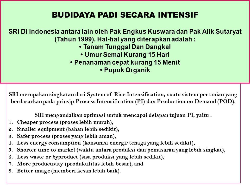 SRI Di Indonesia antara lain oleh Pak Engkus Kuswara dan Pak Alik Sutaryat (Tahun 1999). Hal-hal yang diterapkan adalah : Tanam Tunggal Dan Dangkal Um