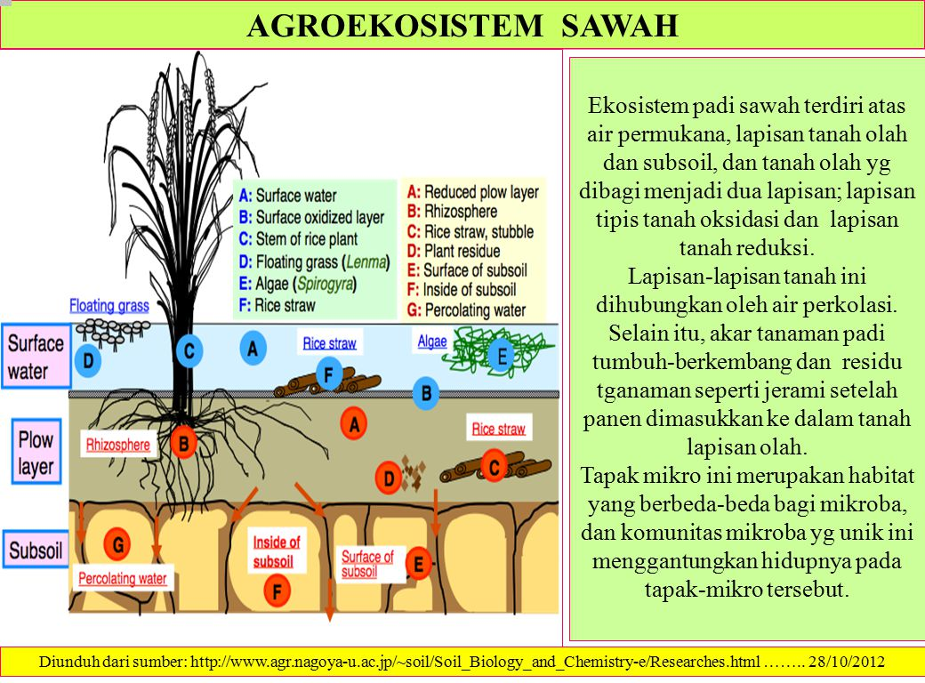 AIR DAN PADI SAWAH Rice and Water B.A.M.Bouman, E.