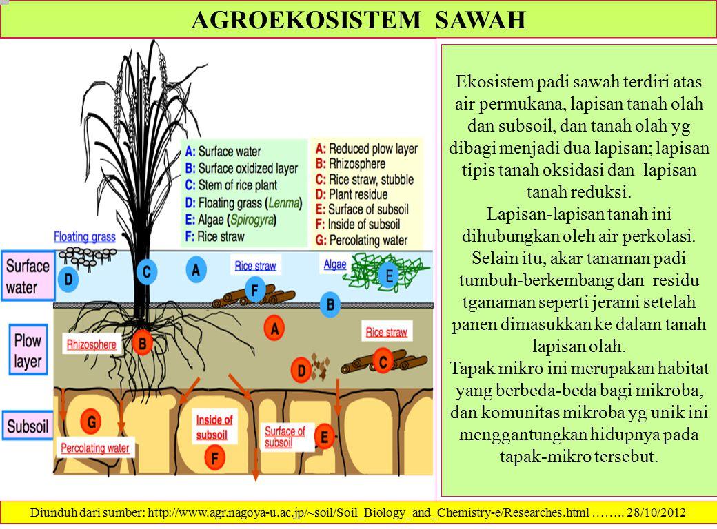 AGROEKOSISTEM SAWAH Ekosistem padi sawah terdiri atas air permukana, lapisan tanah olah dan subsoil, dan tanah olah yg dibagi menjadi dua lapisan; lap
