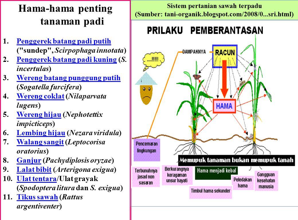 Hama-hama penting tanaman padi 1.Penggerek batang padi putih (