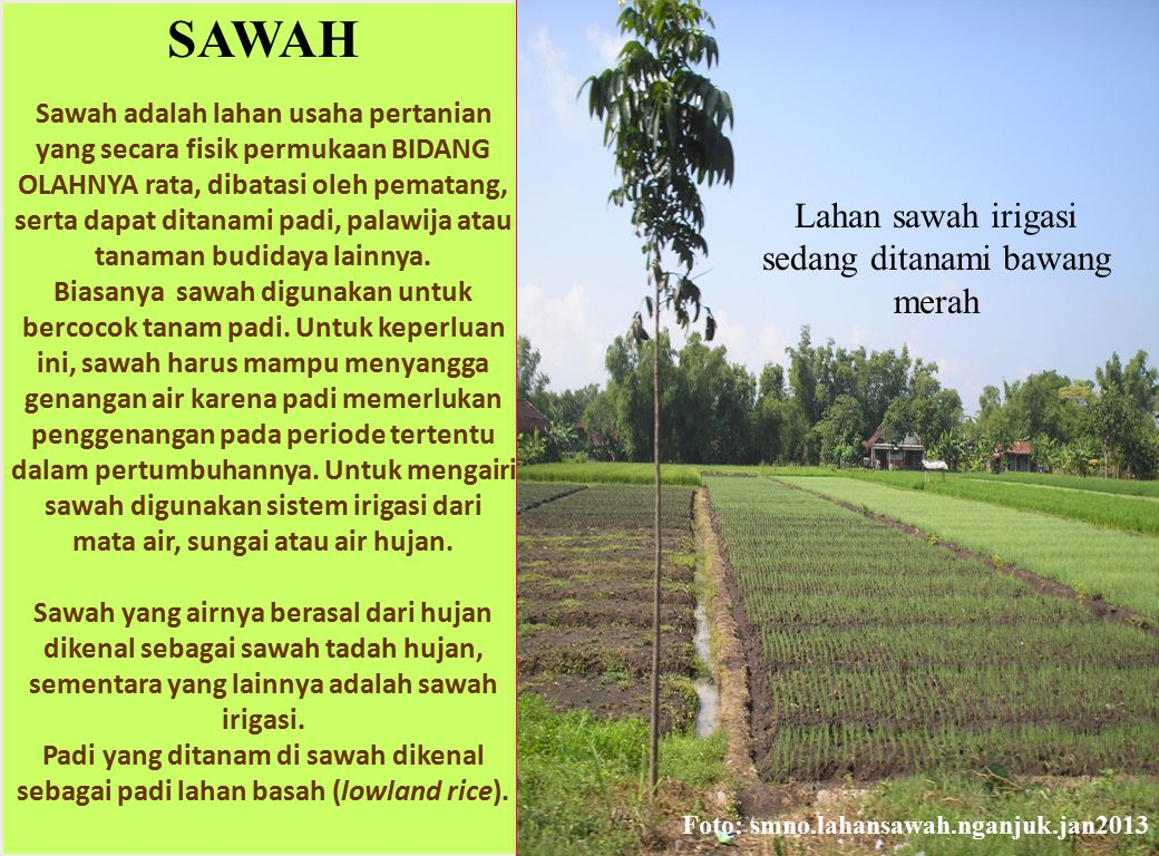 SAWAH = WETLANDS Atmospheric methane (CH 4 ) is an important greenhouse gas.