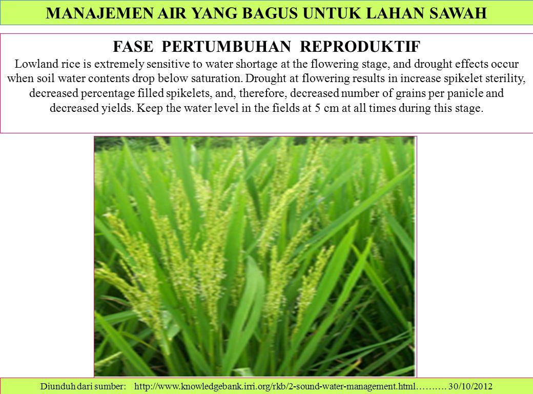 Diunduh dari sumber: http://www.knowledgebank.irri.org/rkb/2-sound-water-management.html………. 30/10/2012 FASE PERTUMBUHAN REPRODUKTIF Lowland rice is e