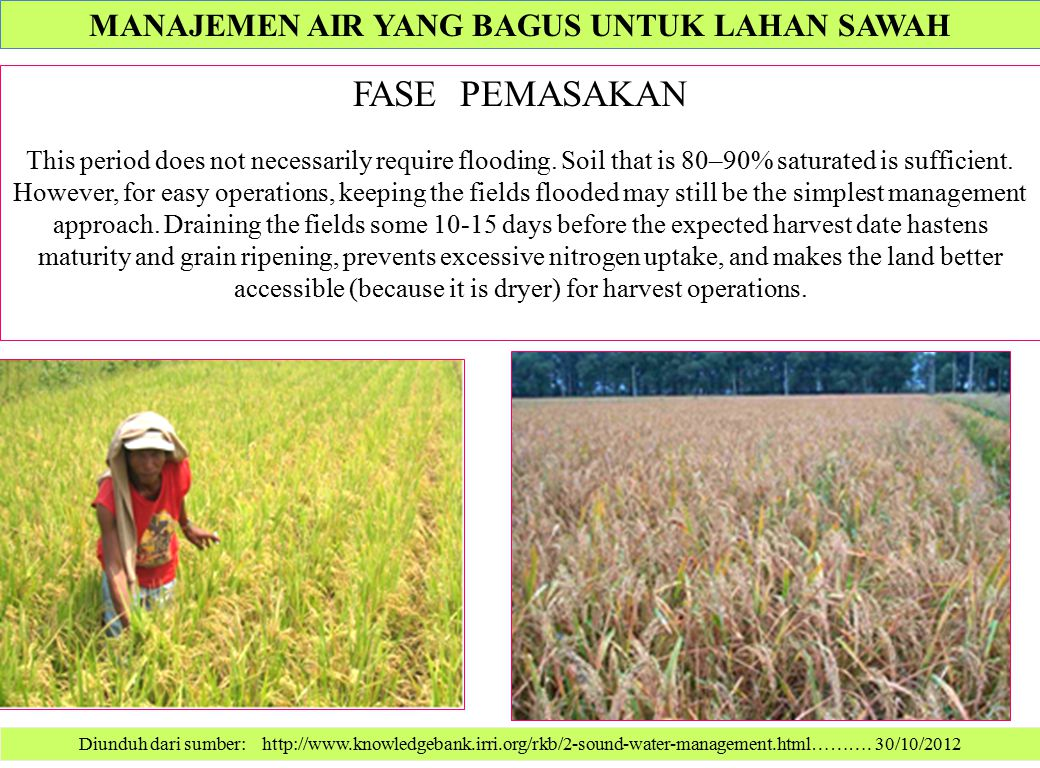 Diunduh dari sumber: http://www.knowledgebank.irri.org/rkb/2-sound-water-management.html………. 30/10/2012 FASE PEMASAKAN This period does not necessaril