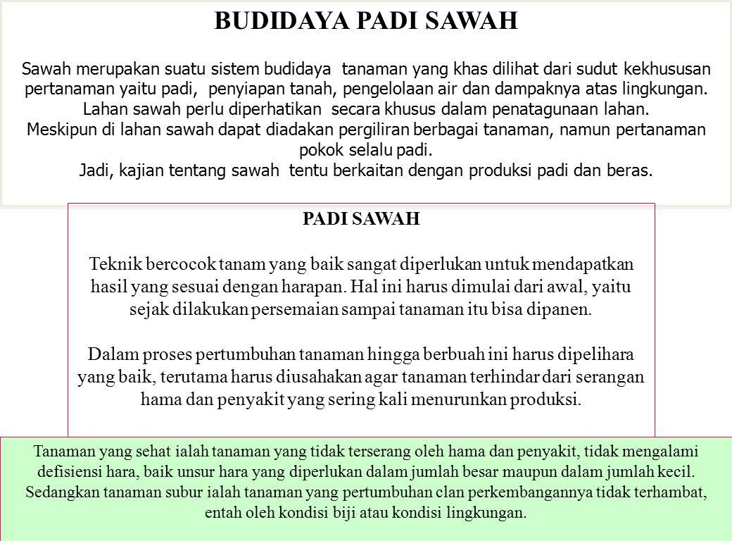 BUDIDAYA PADI SAWAH Sawah merupakan suatu sistem budidaya tanaman yang khas dilihat dari sudut kekhususan pertanaman yaitu padi, penyiapan tanah, peng