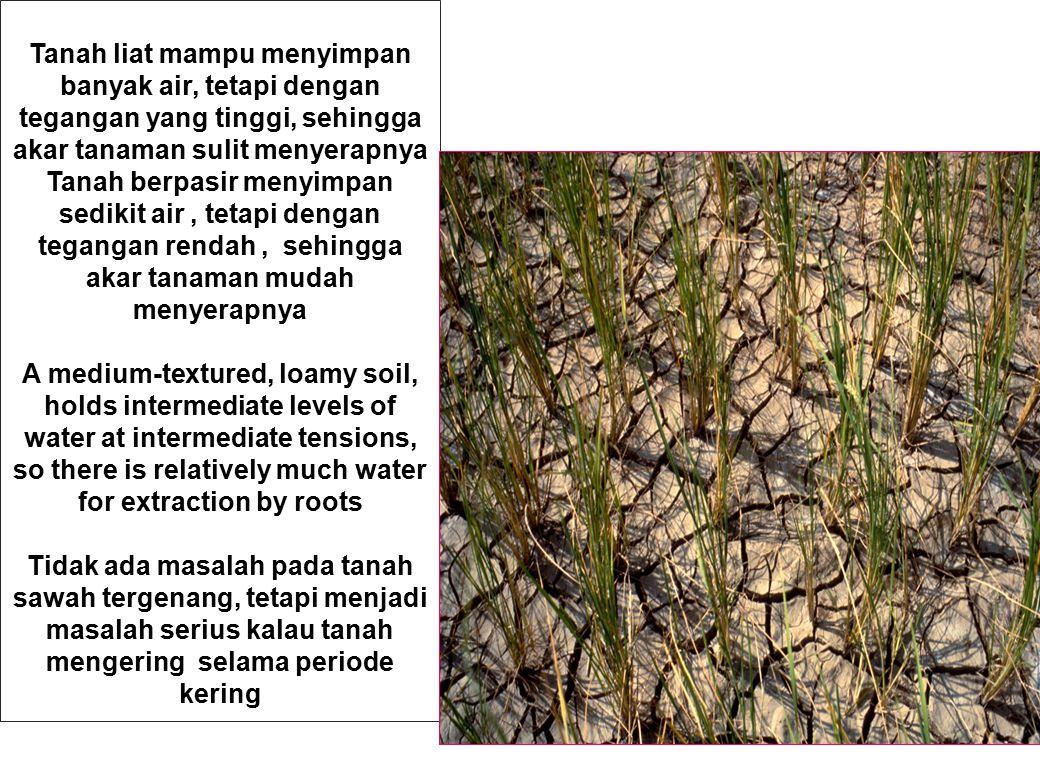 Tanah liat mampu menyimpan banyak air, tetapi dengan tegangan yang tinggi, sehingga akar tanaman sulit menyerapnya Tanah berpasir menyimpan sedikit ai