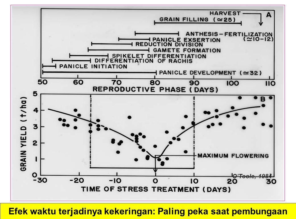 Efek waktu terjadinya kekeringan: Paling peka saat pembungaan O'Toole, 1984