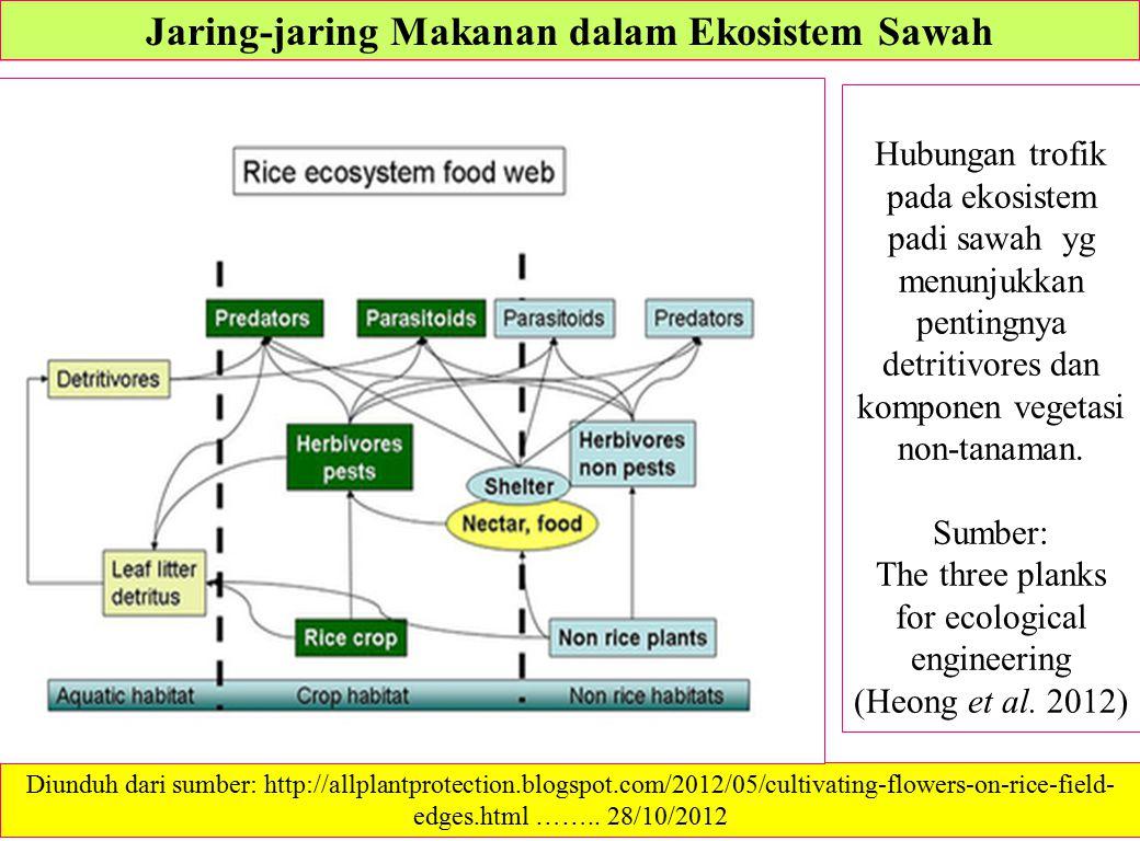 Jaring-jaring Makanan dalam Ekosistem Sawah Hubungan trofik pada ekosistem padi sawah yg menunjukkan pentingnya detritivores dan komponen vegetasi non