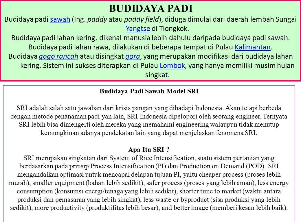 BUDIDAYA PADI Budidaya padi sawah (Ing. paddy atau paddy field), diduga dimulai dari daerah lembah Sungai Yangtse di Tiongkok.sawah Yangtse Budidaya p