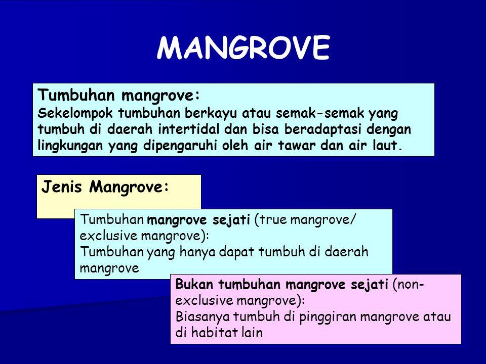 Tumbuhan mangrove: Sekelompok tumbuhan berkayu atau semak-semak yang tumbuh di daerah intertidal dan bisa beradaptasi dengan lingkungan yang dipengaruhi oleh air tawar dan air laut.