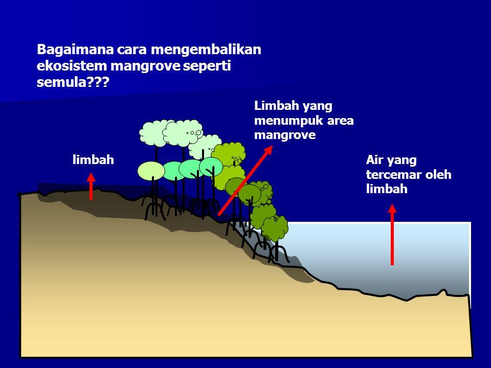 Limbah yang menumpuk area mangrove limbahAir yang tercemar oleh limbah Bagaimana cara mengembalikan ekosistem mangrove seperti semula???
