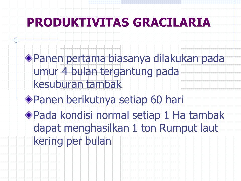 PRODUKTIVITAS GRACILARIA Panen pertama biasanya dilakukan pada umur 4 bulan tergantung pada kesuburan tambak Panen berikutnya setiap 60 hari Pada kond