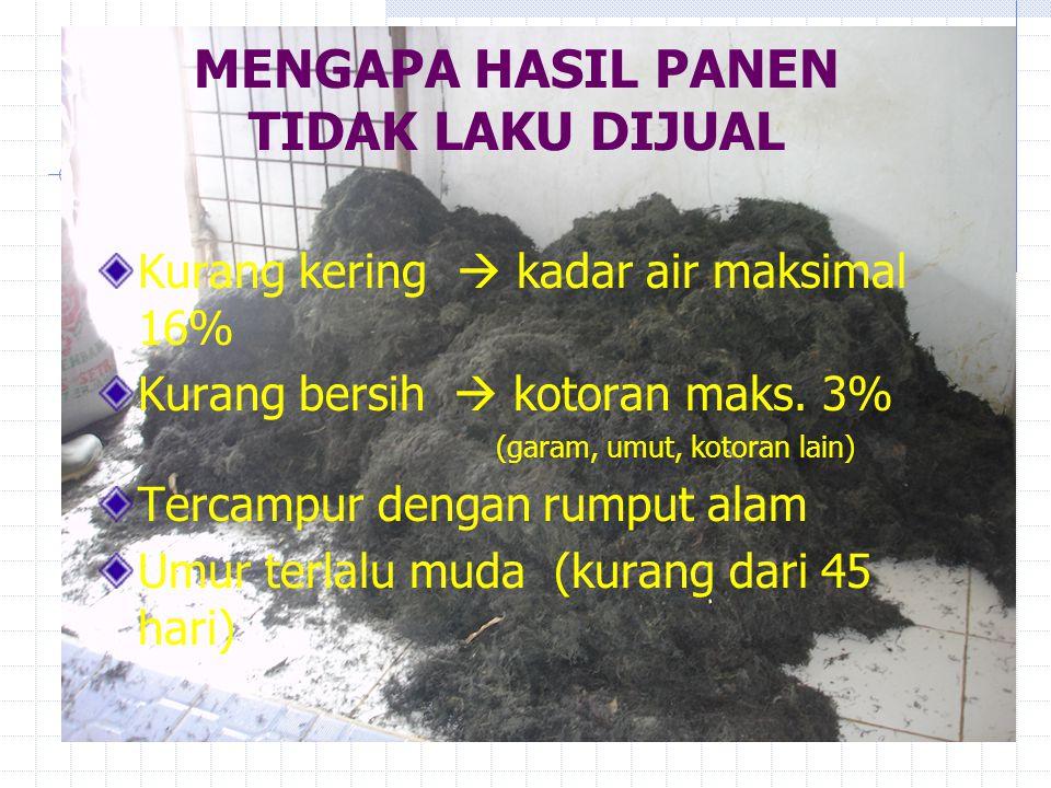 MENGAPA HASIL PANEN TIDAK LAKU DIJUAL Kurang kering  kadar air maksimal 16% Kurang bersih  kotoran maks. 3% (garam, umut, kotoran lain) Tercampur de