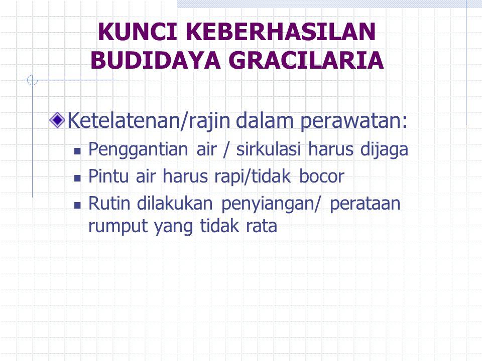 KUNCI KEBERHASILAN BUDIDAYA GRACILARIA Ketelatenan/rajin dalam perawatan: Penggantian air / sirkulasi harus dijaga Pintu air harus rapi/tidak bocor Ru
