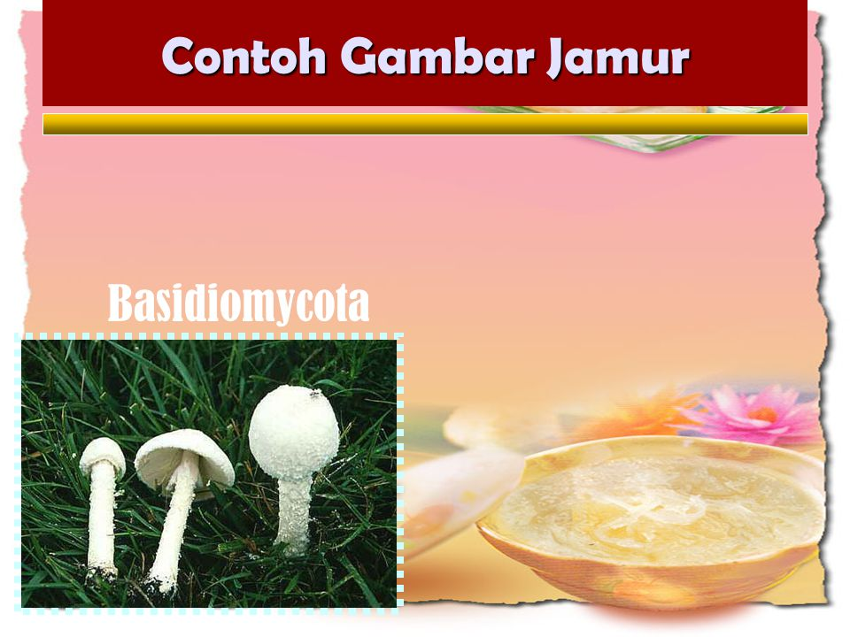 Contoh Gambar Jamur Penicillium Jamur Saccaromyces Aspergillus