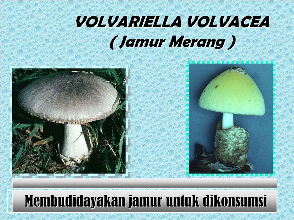 Contoh Gambar Jamur Basidiomycota
