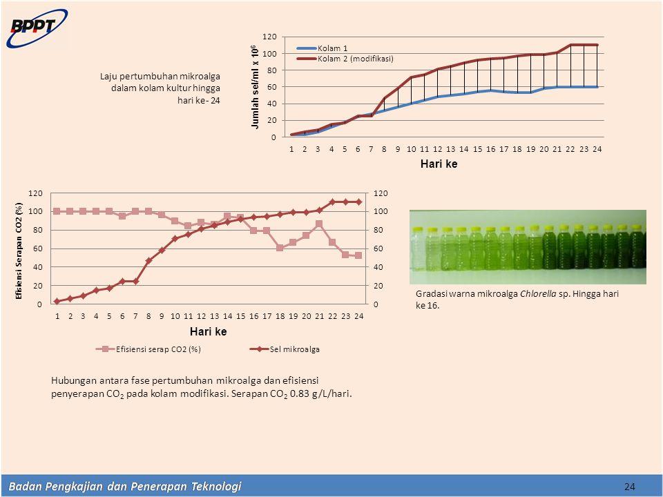 24 Laju pertumbuhan mikroalga dalam kolam kultur hingga hari ke- 24 Gradasi warna mikroalga Chlorella sp. Hingga hari ke 16. Hubungan antara fase pert