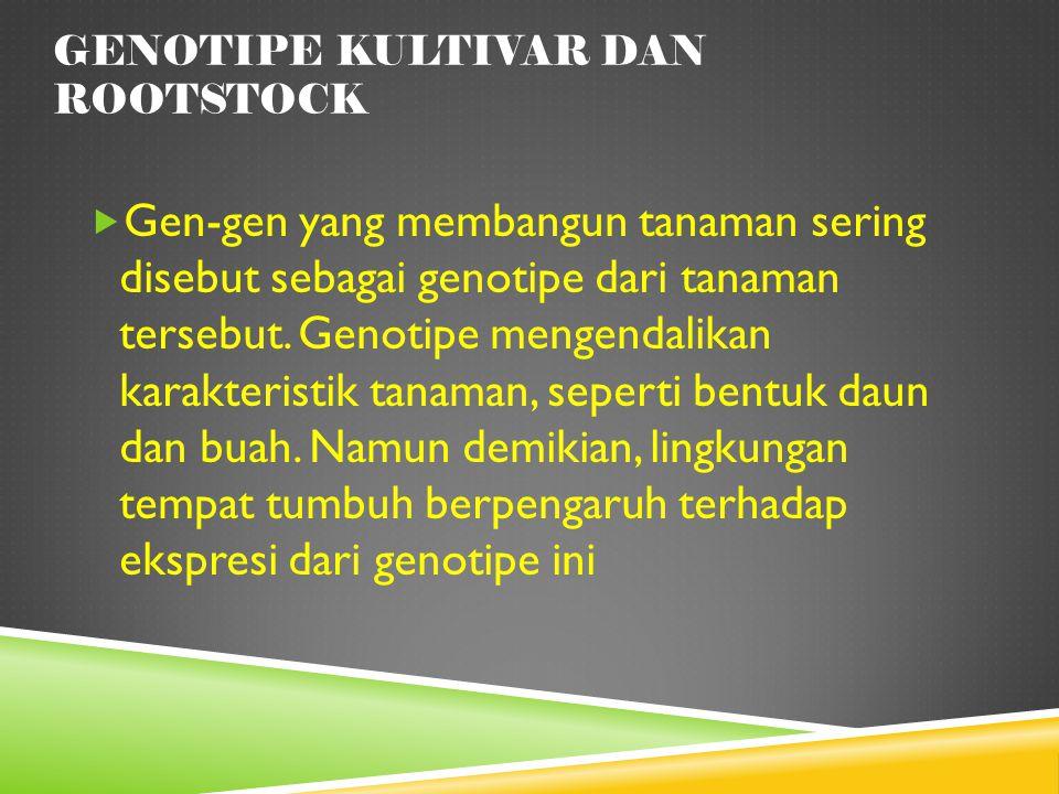 GENOTIPE KULTIVAR DAN ROOTSTOCK  Gen-gen yang membangun tanaman sering disebut sebagai genotipe dari tanaman tersebut. Genotipe mengendalikan karakte