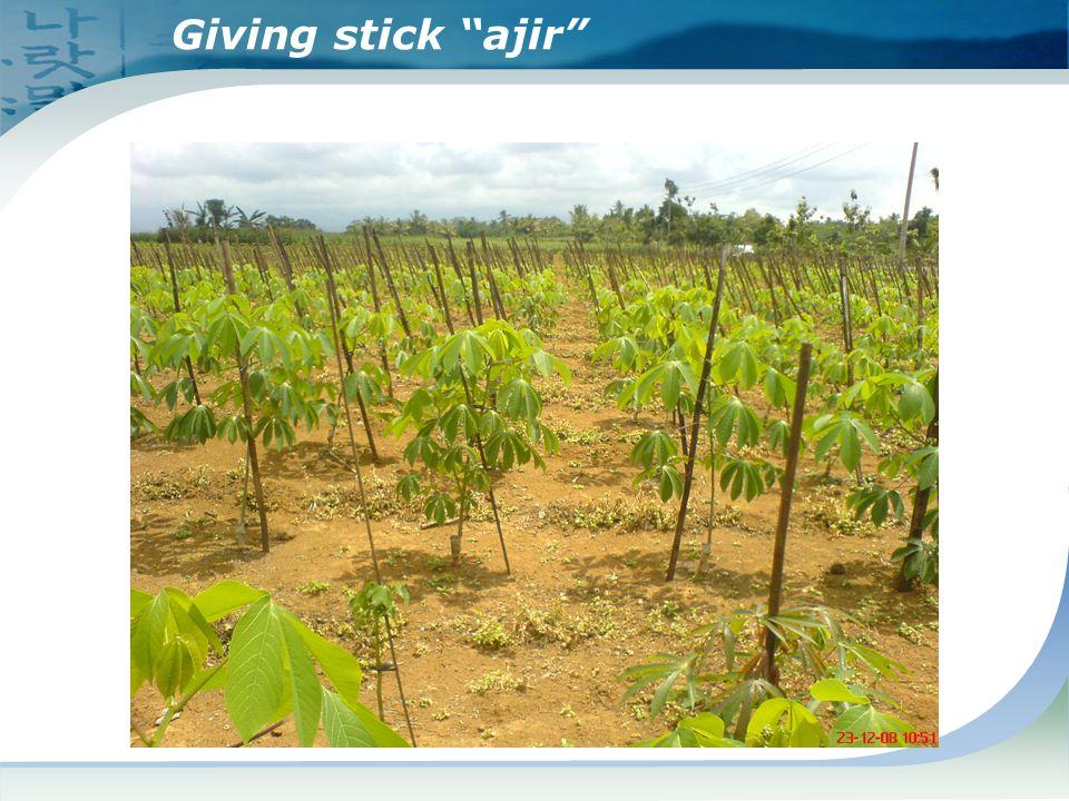 "Giving stick ""ajir"""