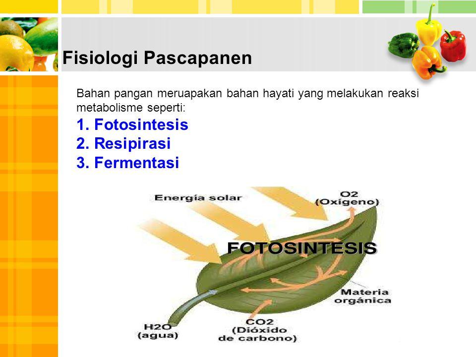Fisiologi Pascapanen Bahan pangan meruapakan bahan hayati yang melakukan reaksi metabolisme seperti: 1.Fotosintesis 2.Resipirasi 3.Fermentasi