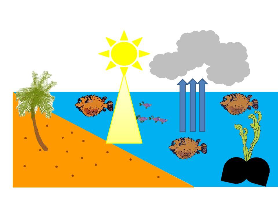 Penjelasan  Siklus air atau siklus hidrologi adalah sirkulasi air yang tidak pernah berhenti dari atmosfer ke bumi dan kembali ke atmosfer melalui kondensasi, presipitasi, evaporasi dan transpirasi.sirkulasiairatmosferbumiatmosferkondensasipresipitasievaporasitranspirasi  Pemanasan air laut oleh sinar matahari merupakan kunci proses siklus hidrologi tersebut dapat berjalan secara terus menerus.