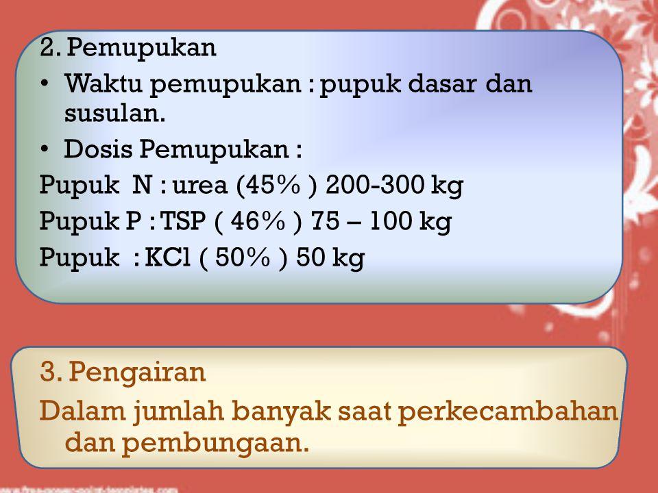 2. Pemupukan Waktu pemupukan : pupuk dasar dan susulan. Dosis Pemupukan : Pupuk N : urea (45% ) 200-300 kg Pupuk P : TSP ( 46% ) 75 – 100 kg Pupuk : K