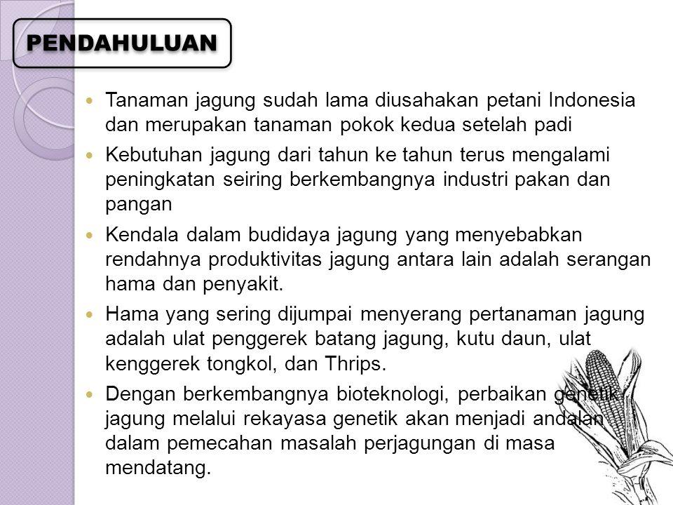 Tanaman jagung sudah lama diusahakan petani Indonesia dan merupakan tanaman pokok kedua setelah padi Kebutuhan jagung dari tahun ke tahun terus mengal