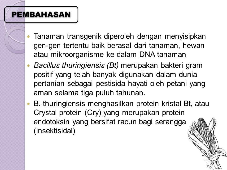 Gen Bt yang sudah banyak ditransformasikan ke dalam tanaman jagung adalah yang menghasilkan jenis Bt endotoksin dari gen Cry1Ab Setelah dimakan oleh corn borer, Bt protein dipecah oleh suatu enzim pemecah dalam pencernaan yang bersifat alkalin dari larva serangga dan menghasilkan protein pendek yang mengikat dinding pencernaan Produksi jagung Bt pada saat ini didominasi oleh Amerika, di mana areal pertanamannya pada tahun 2000 telah mencapai 92% dari total areal pertanaman jagung (Herman 2002)