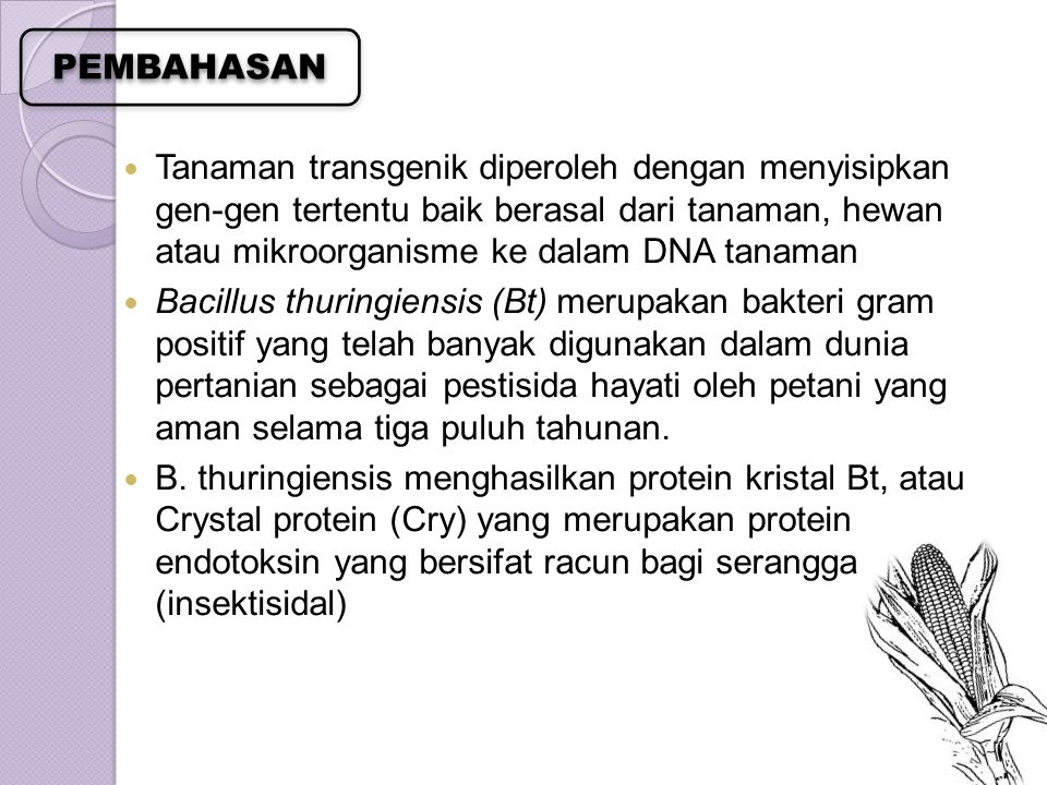 Tanaman transgenik diperoleh dengan menyisipkan gen-gen tertentu baik berasal dari tanaman, hewan atau mikroorganisme ke dalam DNA tanaman Bacillus th