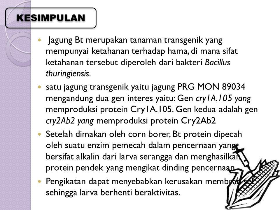 Jagung Bt merupakan tanaman transgenik yang mempunyai ketahanan terhadap hama, di mana sifat ketahanan tersebut diperoleh dari bakteri Bacillus thurin