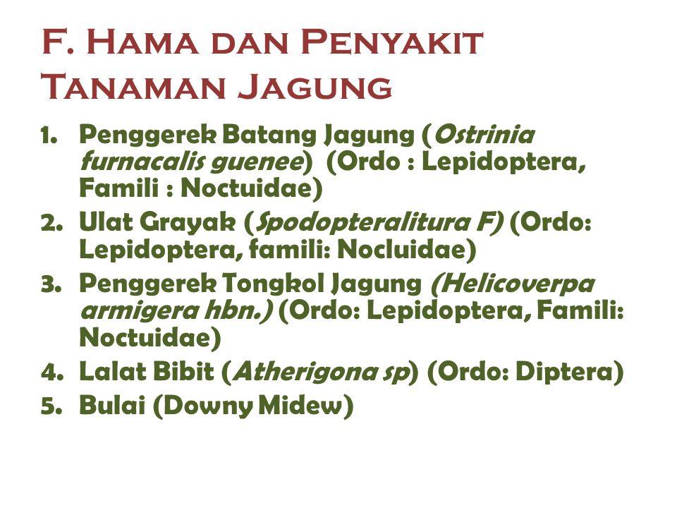 F. Hama dan Penyakit Tanaman Jagung 1.Penggerek Batang Jagung (Ostrinia furnacalis guenee) (Ordo : Lepidoptera, Famili : Noctuidae) 2.Ulat Grayak (Spo