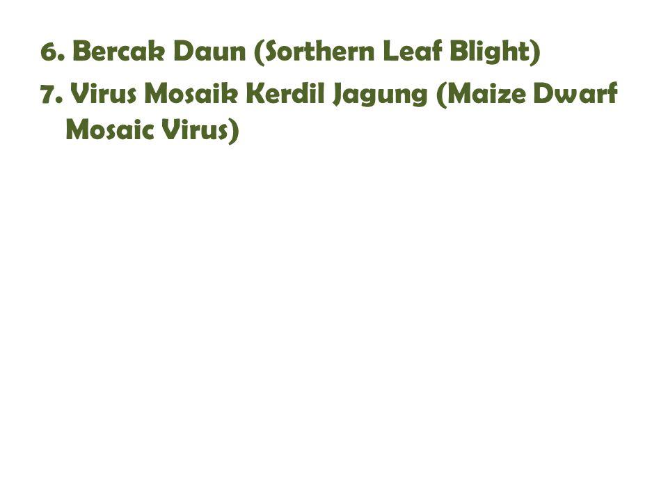 6. Bercak Daun (Sorthern Leaf Blight) 7. Virus Mosaik Kerdil Jagung (Maize Dwarf Mosaic Virus)
