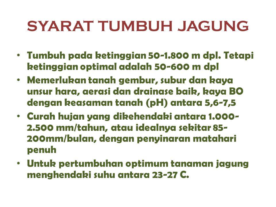 SYARAT TUMBUH JAGUNG Tumbuh pada ketinggian 50-1.800 m dpl. Tetapi ketinggian optimal adalah 50-600 m dpl Memerlukan tanah gembur, subur dan kaya unsu