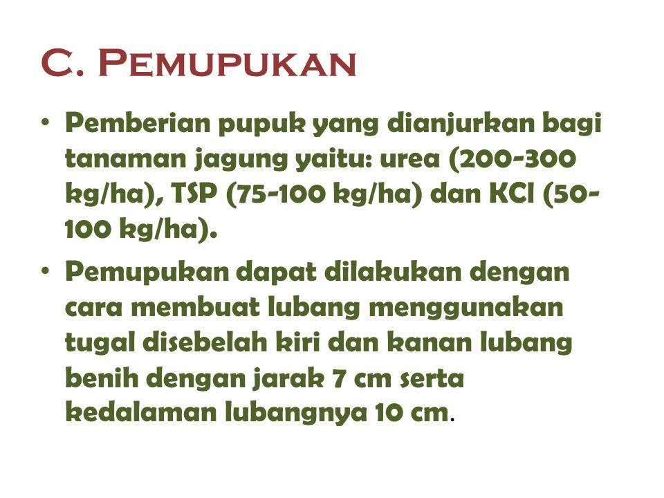 C. Pemupukan Pemberian pupuk yang dianjurkan bagi tanaman jagung yaitu: urea (200-300 kg/ha), TSP (75-100 kg/ha) dan KCl (50- 100 kg/ha). Pemupukan da