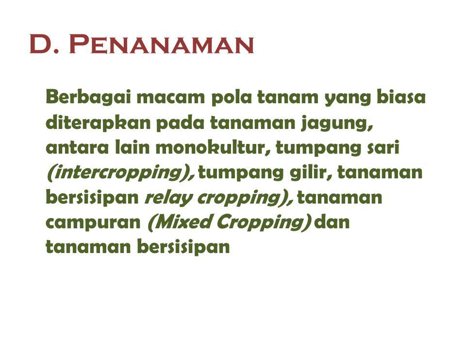 D. Penanaman Berbagai macam pola tanam yang biasa diterapkan pada tanaman jagung, antara lain monokultur, tumpang sari (intercropping), tumpang gilir,