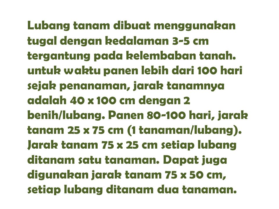 Lubang tanam dibuat menggunakan tugal dengan kedalaman 3-5 cm tergantung pada kelembaban tanah. untuk waktu panen lebih dari 100 hari sejak penanaman,