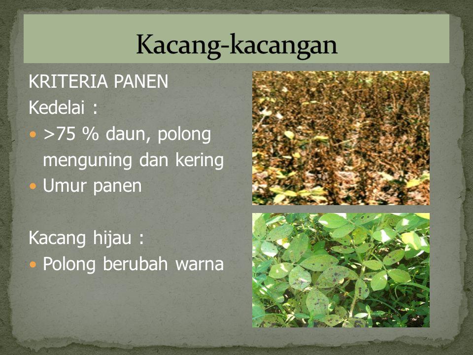 KRITERIA PANEN Kedelai : >75 % daun, polong menguning dan kering Umur panen Kacang hijau : Polong berubah warna