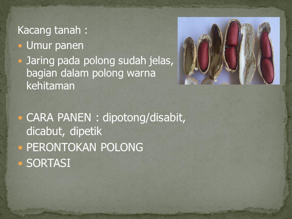 Kacang tanah : Umur panen Jaring pada polong sudah jelas, bagian dalam polong warna kehitaman CARA PANEN : dipotong/disabit, dicabut, dipetik PERONTOK