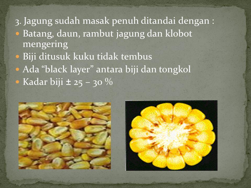Apabila dijadikan benih, biji dengan kadar air harus < 9 %.