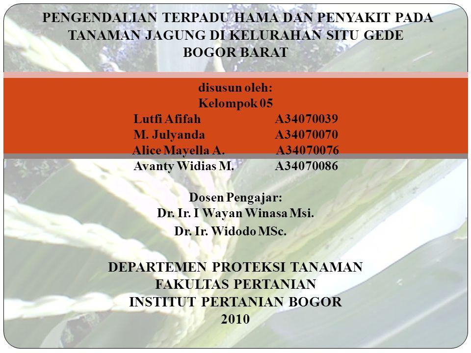 PENGENDALIAN TERPADU HAMA DAN PENYAKIT PADA TANAMAN JAGUNG DI KELURAHAN SITU GEDE BOGOR BARAT disusun oleh: Kelompok 05 Lutfi AfifahA34070039 M.