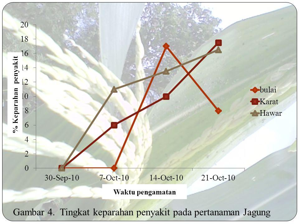 Gambar 3. Tingkat kejadian penyakit pada pertanaman Jagung Waktu pengamatan % Kejadian penyakit