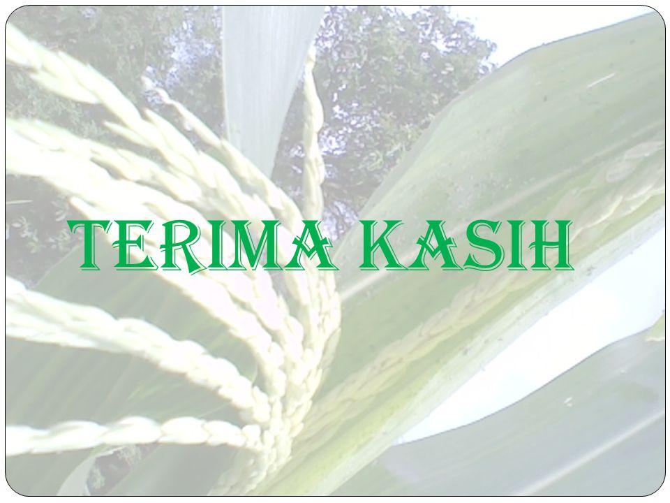 Wawancara dengan petani jagung
