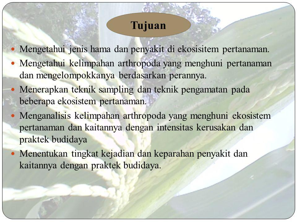 Latar belakang Tanaman jagung sudah lama diusahakan petani Indonesia dan merupakan tanaman pokok kedua setelah padi. Jagung memiliki peranan penting d