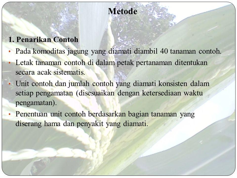 Metode 1.Penarikan Contoh Pada komoditas jagung yang diamati diambil 40 tanaman contoh.